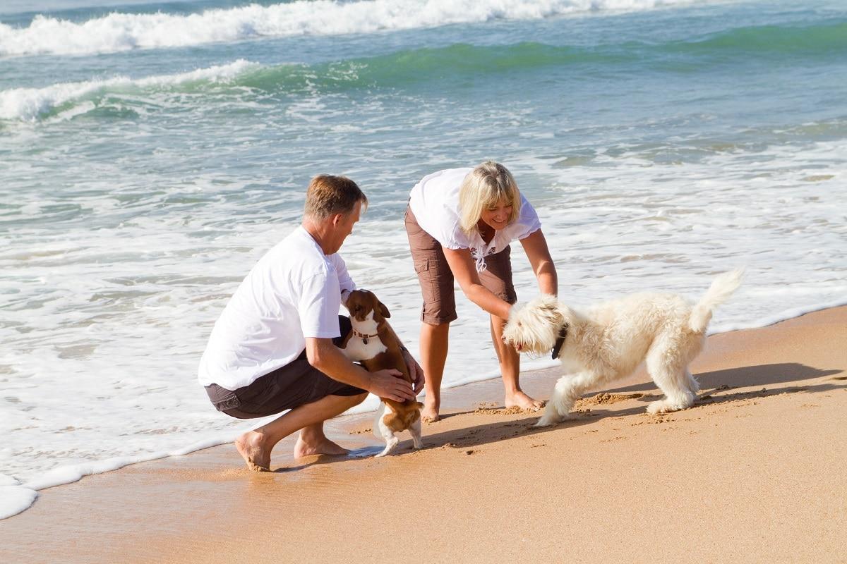 genieten aan de kust met hond