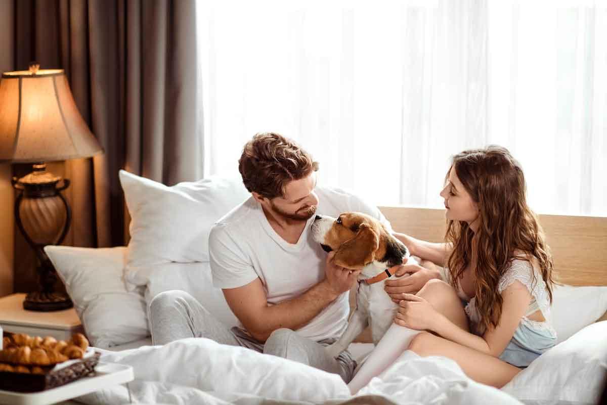hotelkamer met hond